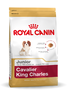 Cavalier King Charles Junior