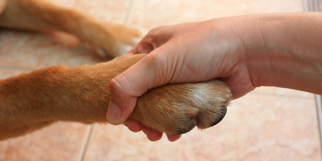 Dog Tricks: Three Steps For Teaching A Dog To High Five