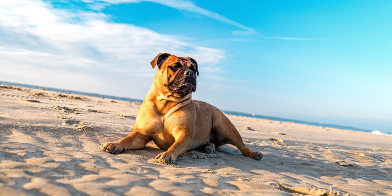 Treating Seasonal Hot Spots on Your Pets