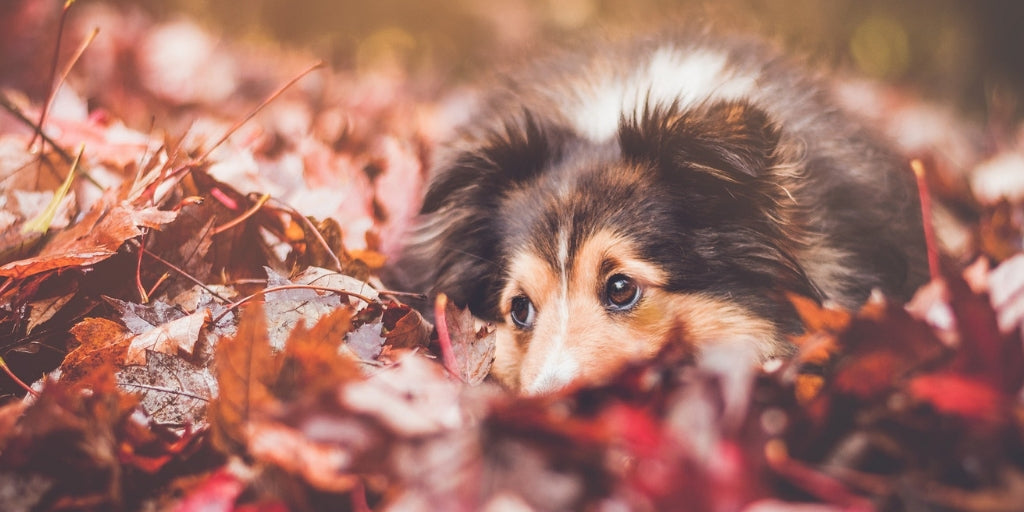 How You Can Keep Your Furry Friends Safe This Thanksgiving