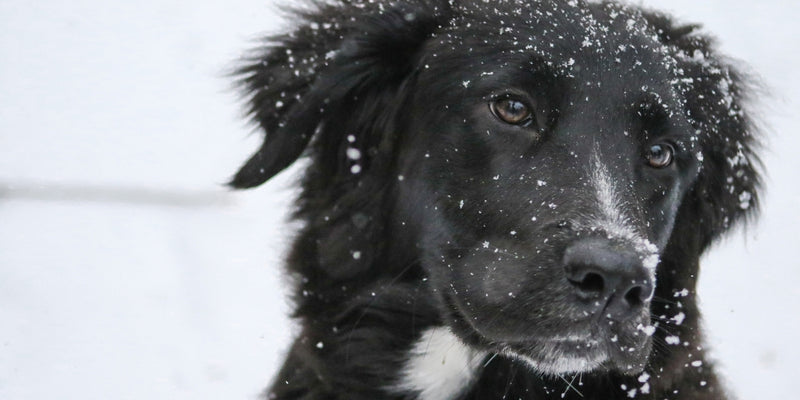 Keeping Your Dog Busy Indoors this Winter