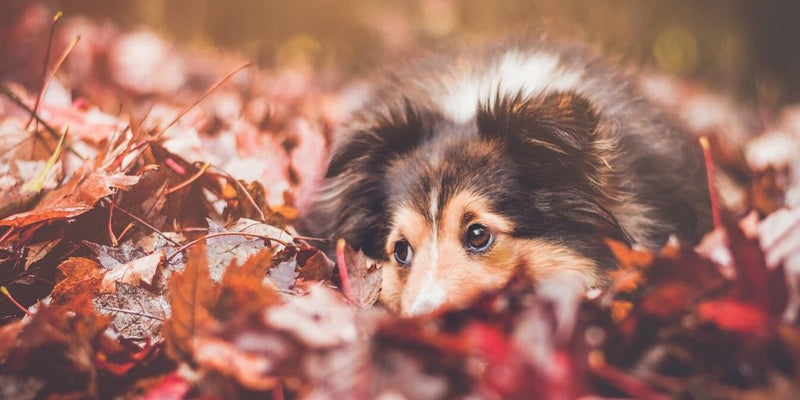 Fall Pet Safety Tips