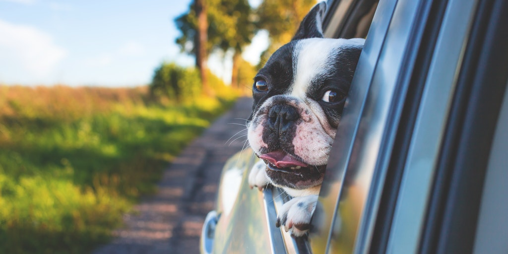 5 Essential Holiday Travel Tips for Pet Owners