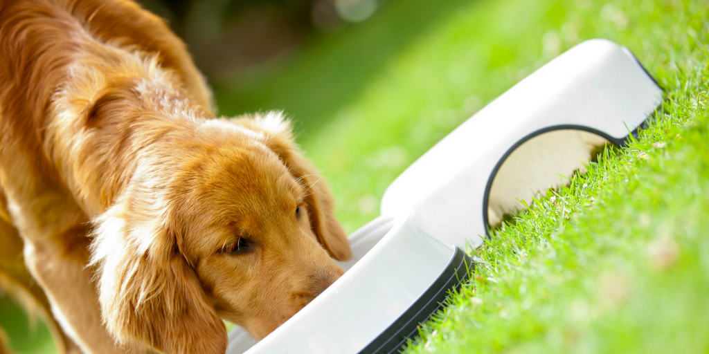 What to Consider When Buying Dog Food
