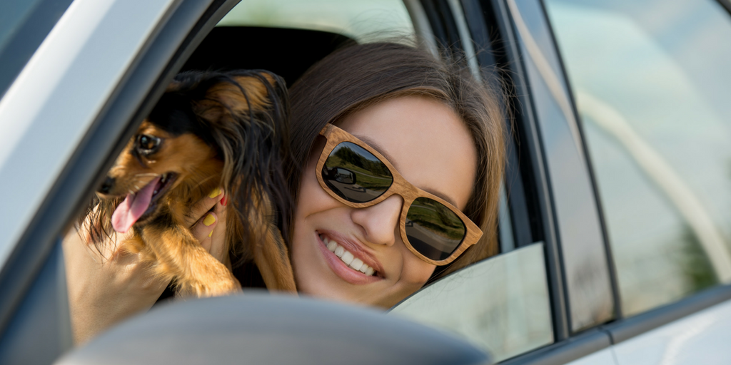 Car Travel with Your Dog: 5 Safety Tips to Follow