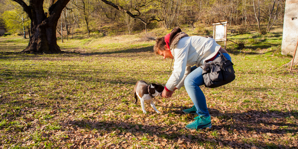 5 Tips For Dealing With Dog Park Bullies