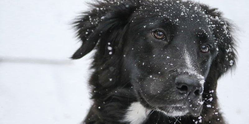 Have a Safe and Healthy Winter with Your Pet