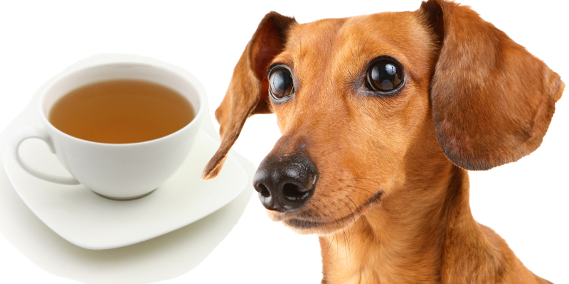 bone broth for dogs and cats