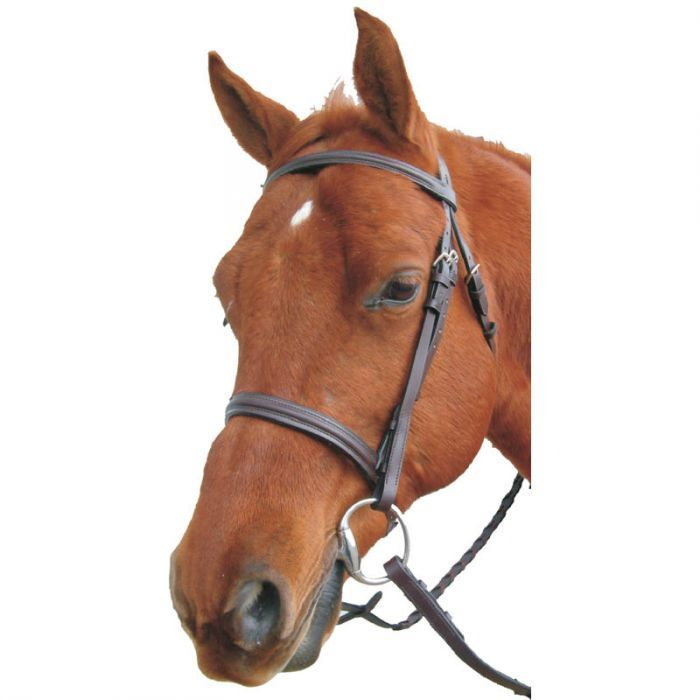 Sage Family Raised English Bridle with Laced Reins - PONY