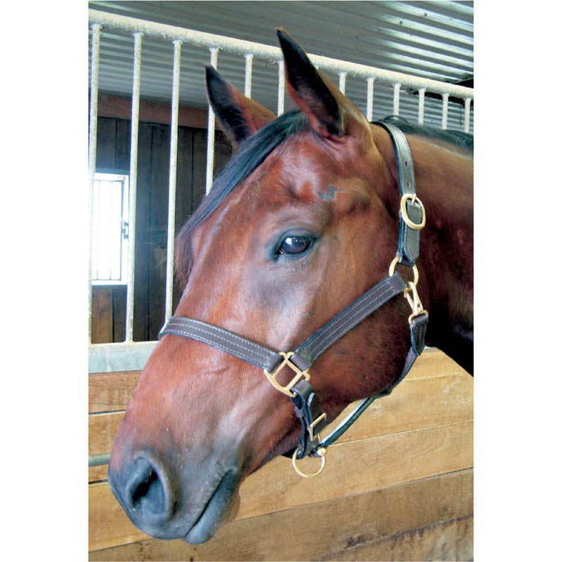Bromont Basic Leather Halter