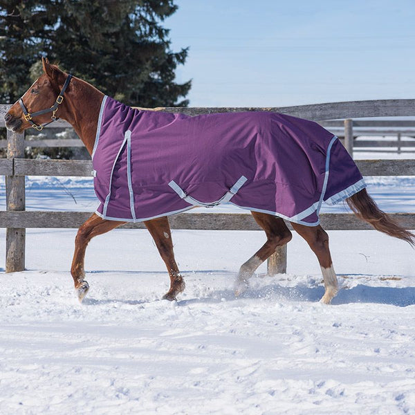 2020 Denali Turnout by Canadian Horsewear 160gm