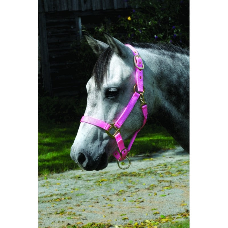 Cavalier Super Soft Nylon Halter - PONY