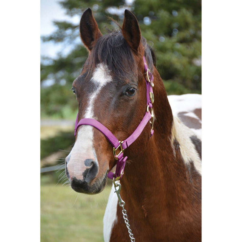 WESTERN RAWHIDE SIGNATURE CLASSIC HALTER WITH SNAP