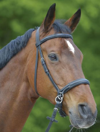 Waldhausen Star Bitless Bridle