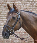 Waldhausen Star Basic Bridle with Flash