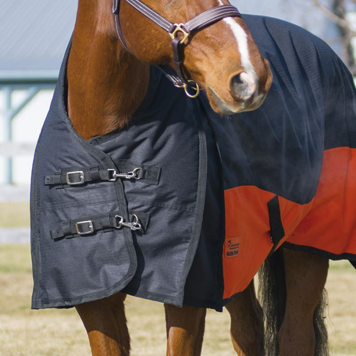Marigold 160gm Fill Blanket By Canadian Horsewear Co.