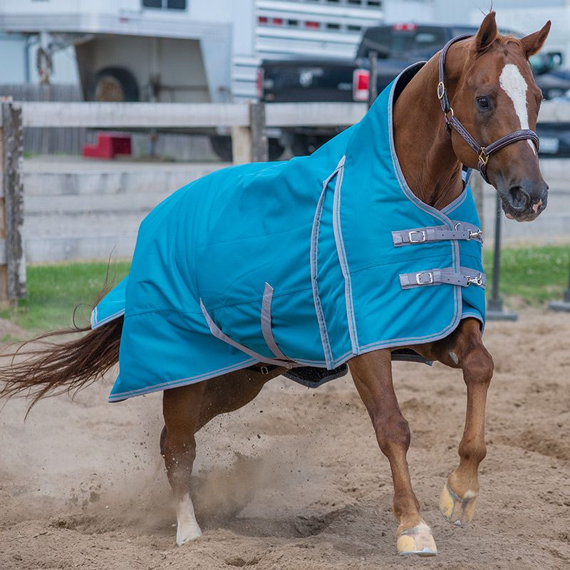2020 Canadian Horsewear Meridian Turnout 300 gm