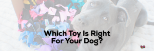 Which Toy Is Right For Your Dog?