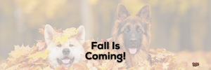 Fall Is Coming!