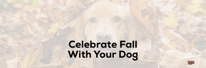 Celebrate Fall With Your Dog