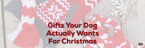 Gifts Your Dog Actually Wants For Christmas