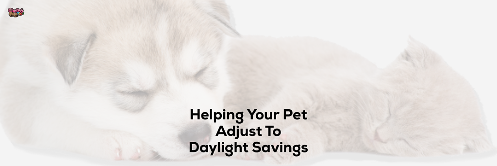 Helping Your Pet Adjust To Daylight Savings