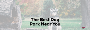 The Best Dog Park Near You