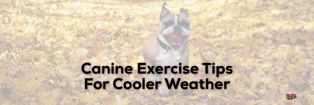 Canine Exercise Tips For Cooler Weather