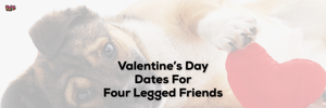 Valentine's Day Dates For Four Legged Friends