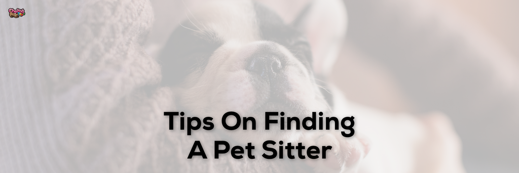 Tips On Finding A Pet Sitter