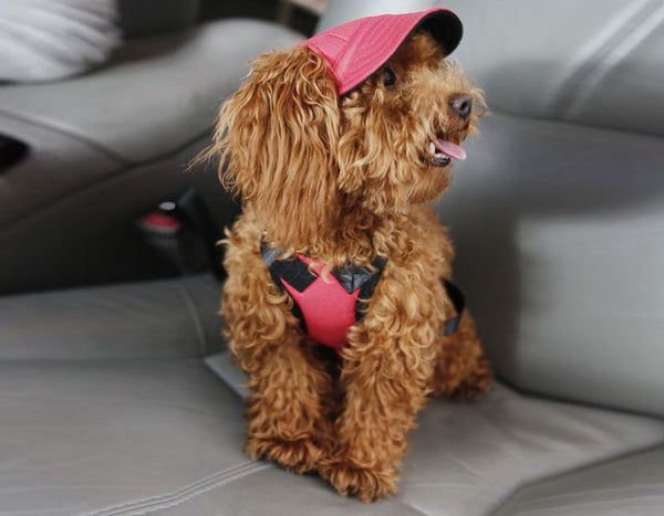Stylish Hats For Dogs