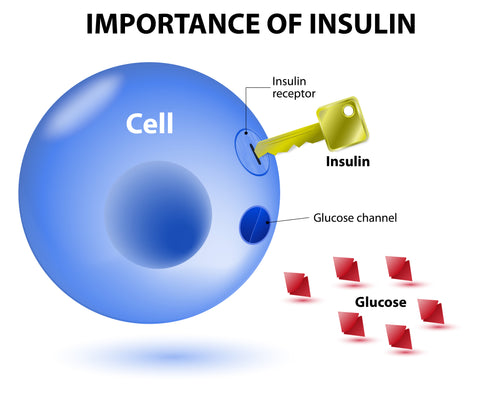 Illustration of the importance of insulin and how it works
