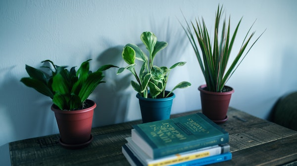 Houseplants & Nice Furniture — Can They Co-Exist?