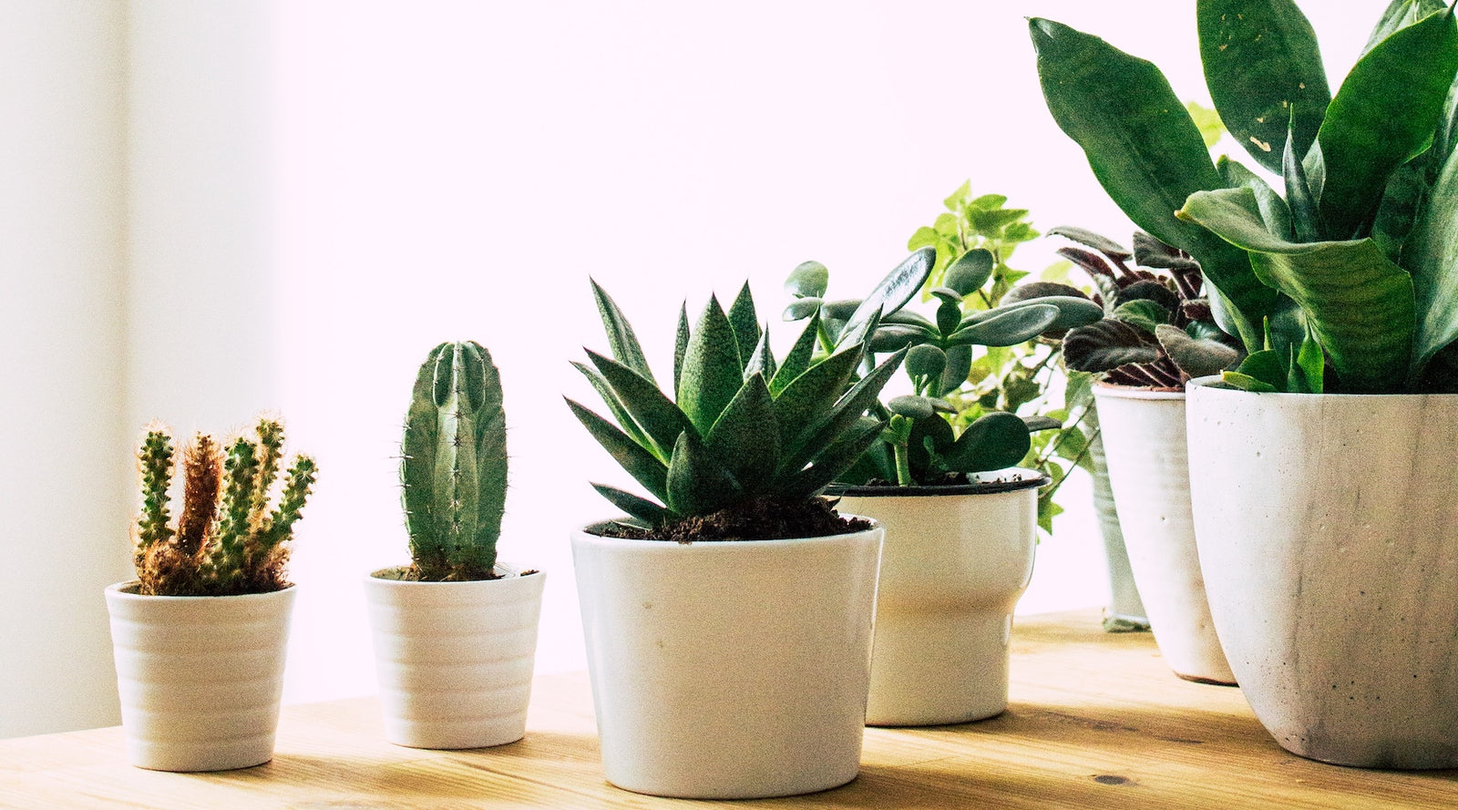 Calling All Plant Killers 5 No Brainer Tips To Grow Succulents Indoors Concrete Unicorn
