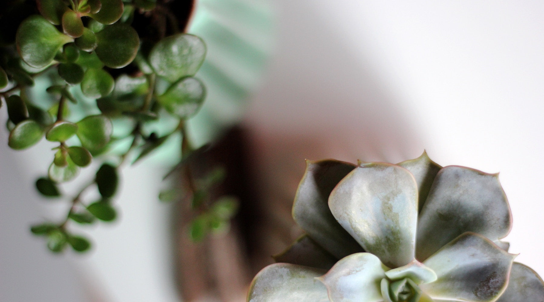 Indoor Plants: How to Make Them Thrive