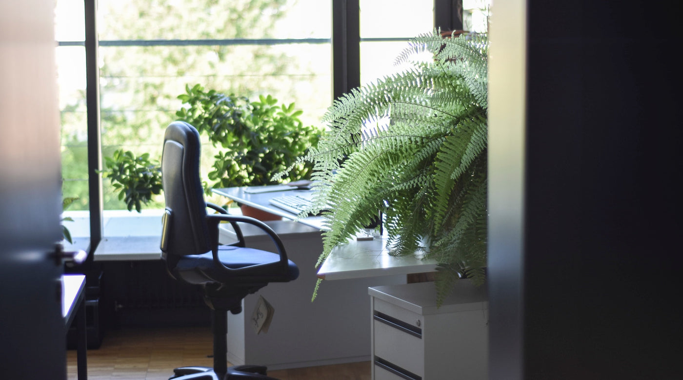 456 best images about cubicle and office decor on.htm top 5 office plants to boost your mood   productivity concrete  top 5 office plants to boost your mood