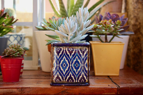 4 Health Benefits of Having Succulents & Cacti In Your Home
