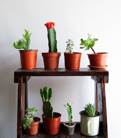 4 Health Benefits of Having Succulents & Cacti In Your Home ... on inside home goods, inside home art, inside home backgrounds, inside home decorations, inside home lighting, inside home photography, inside home bugs, inside home flowers, inside home walls, inside home trees, inside home gardens, inside home design, inside home christmas, inside home fire,