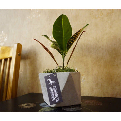 GEO Cube Planter-Concrete Unicorn