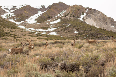 Deer below McGee Mountain