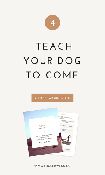 dog training guides