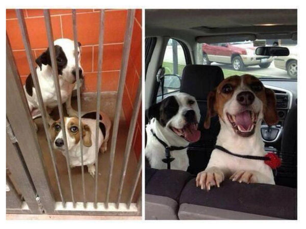 Adopted Dogs Before and After