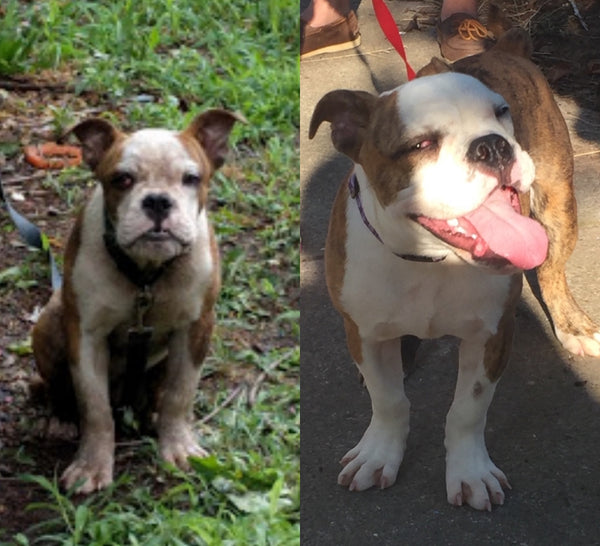 Before and After Dog Adoption