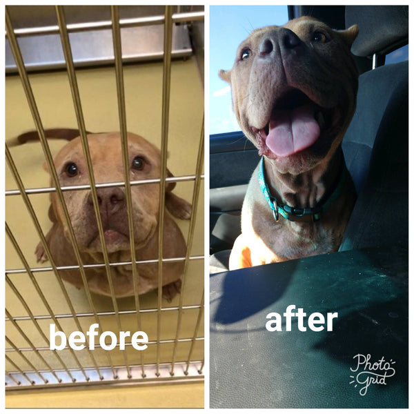 before and after rescue dogs