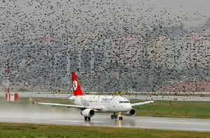 Bird repellents on planes are not scientifically proven!