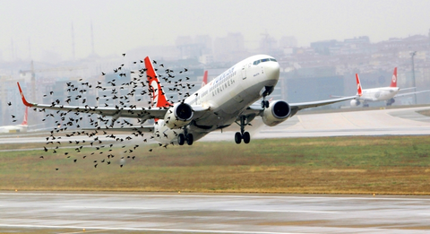 Risk of bird strike