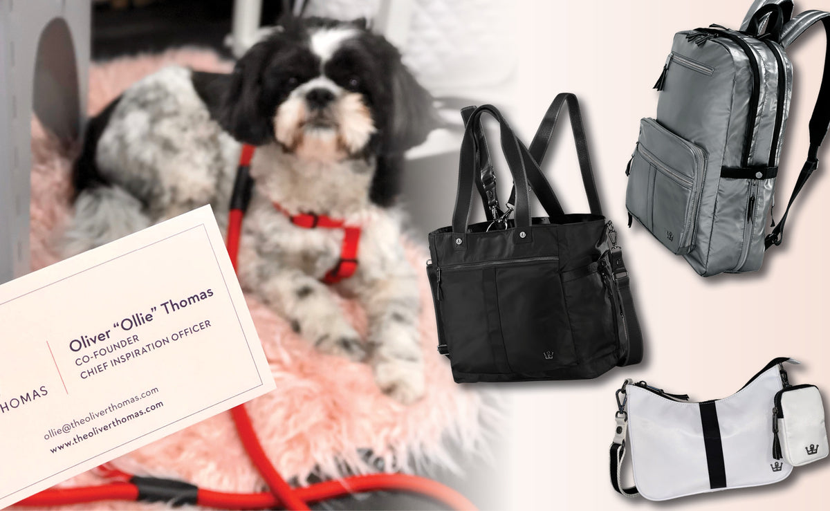 New C-Suite Nylon Collection: Whether You're A Hooman Or Dog Be The CEO Of Your Life