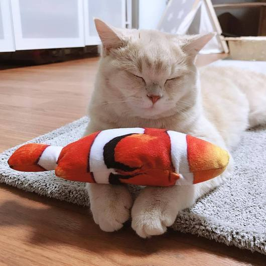 products/Cat_Kicker_Toy_amazinglycat_catnip_fish_clownfish_530x_e537d61f-090c-4425-a170-c86054cf1f24.jpg