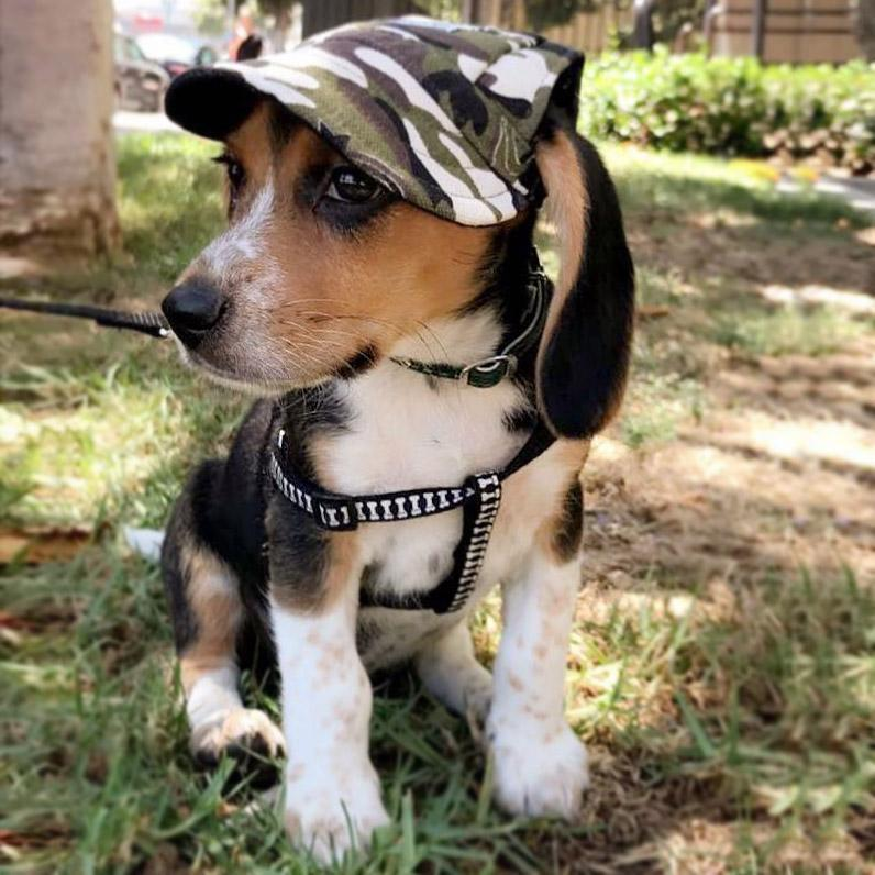 products/inspire-uplift-dogs-custom-made-machiko-dog-hats-adorable-2544558407796_1000x.progressive_f3b83cdc-073d-4f16-be7a-3dd94dcd8623.jpg