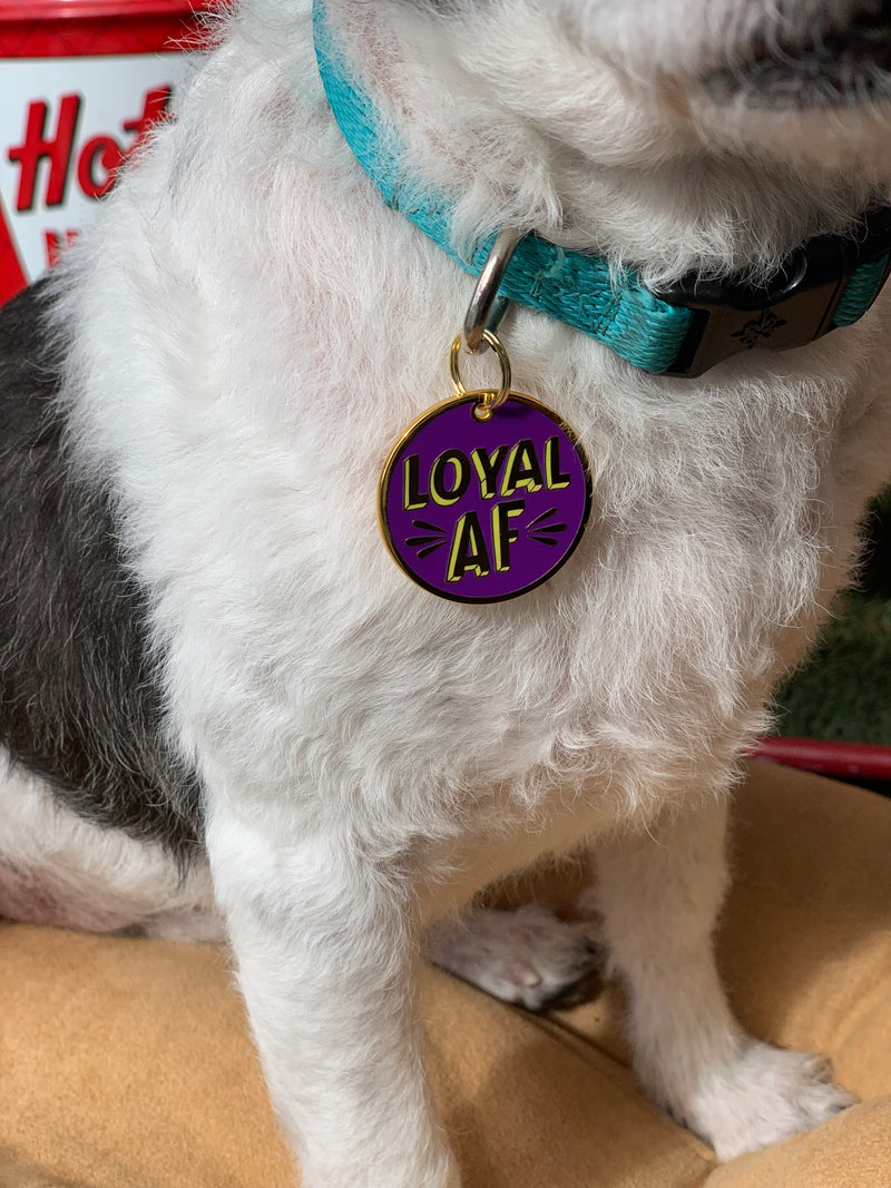 Pet Collar Charm- Loyal AF